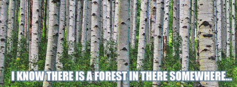 forest-for-trees