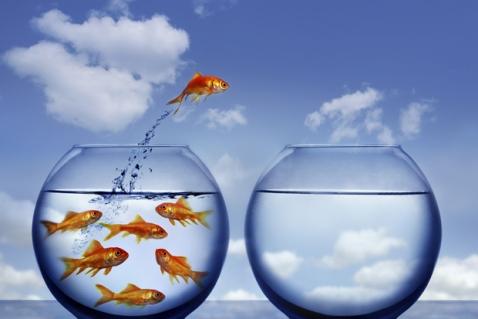 adaptability risk3