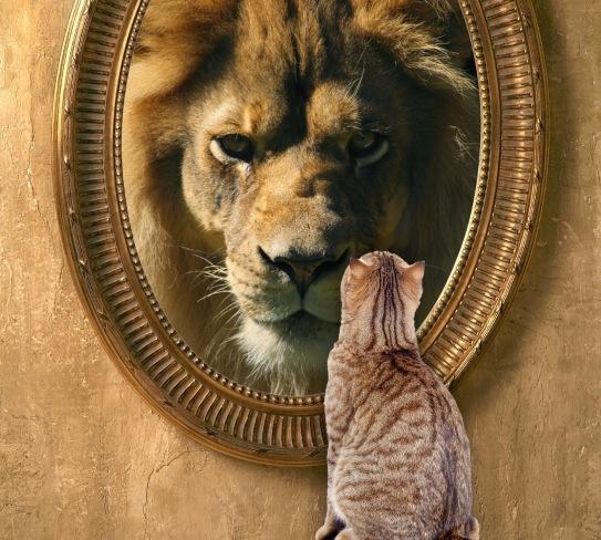 ep-cat-lion